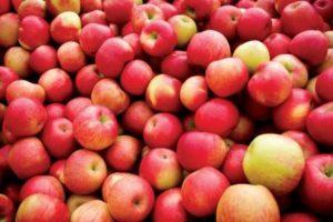 Яблочные поверья Озарк