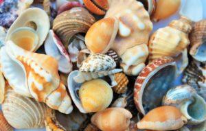 Морские раковины в магии