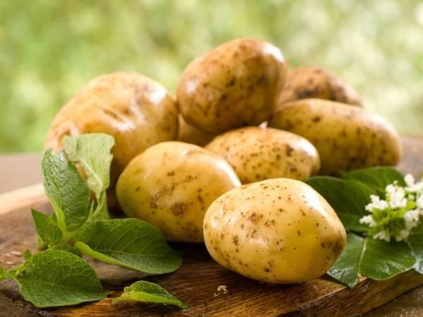 Картофель - магические свойства