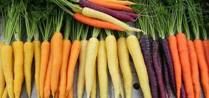 Магия моркови